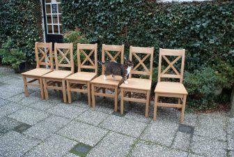 grenen stoelen zwolle